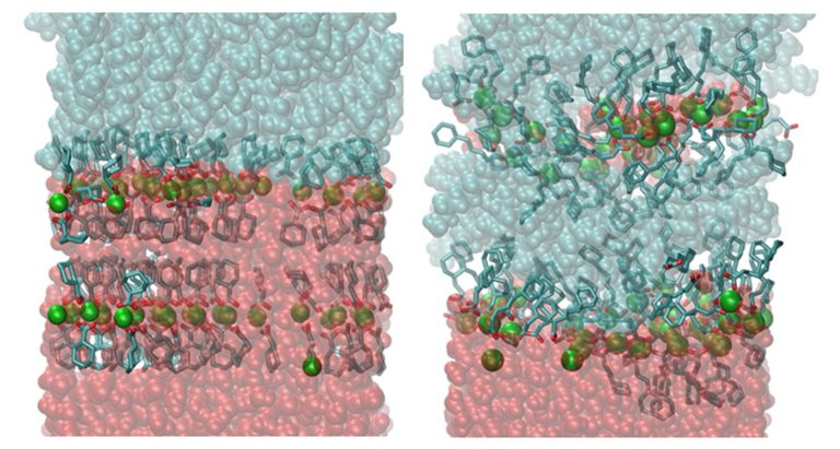 Figure 5. Molecular dynamics simulation of a Zn crystal with the n =0 acid (left) and the n =4 acid (right) at the decane water interface after 300 ns.  The initial state was a uniformly distributed lattice in both cases.  Water is at the bottom and it can be seen that the water breaks through in the case of the small acid and results in dissolution.[TS1] [U2]